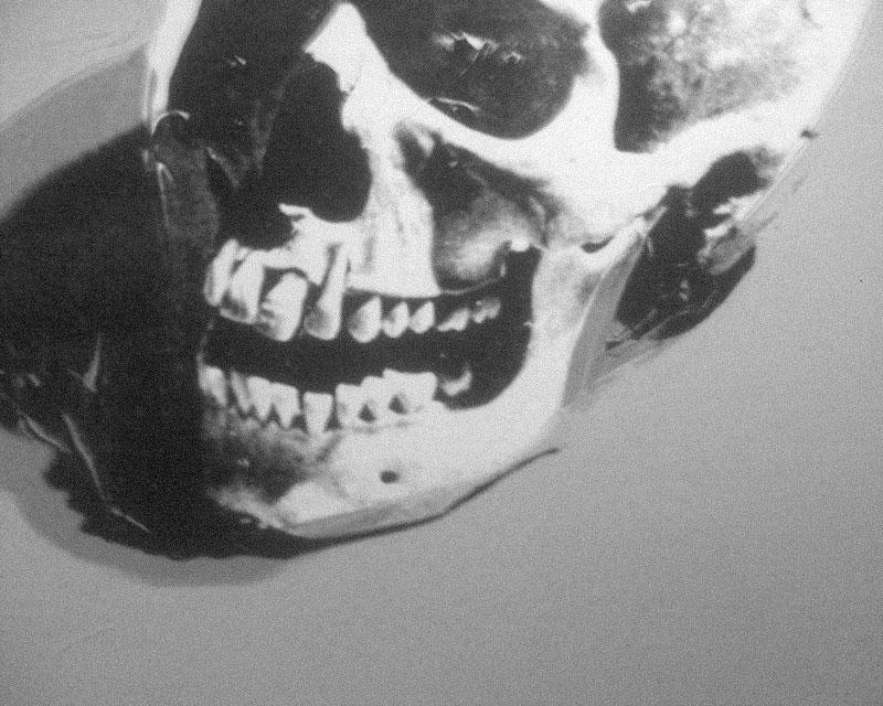 brandonschauer_skull.jpg