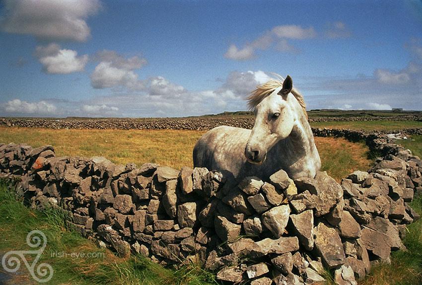 the white pony of Inis Mor