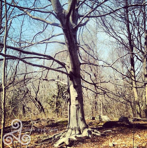 druidtree.jpg