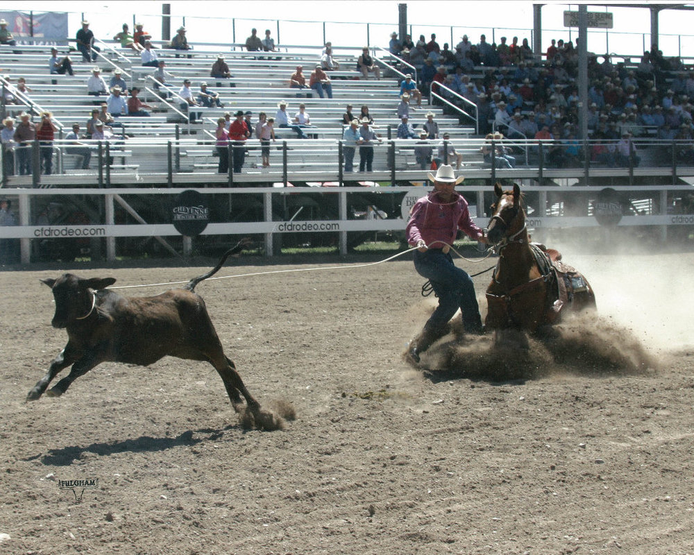 Cody Ohl roping on Big Smokin Wonder, aka 'Pearl', at the 2008 Cheyenne Frontier Days.