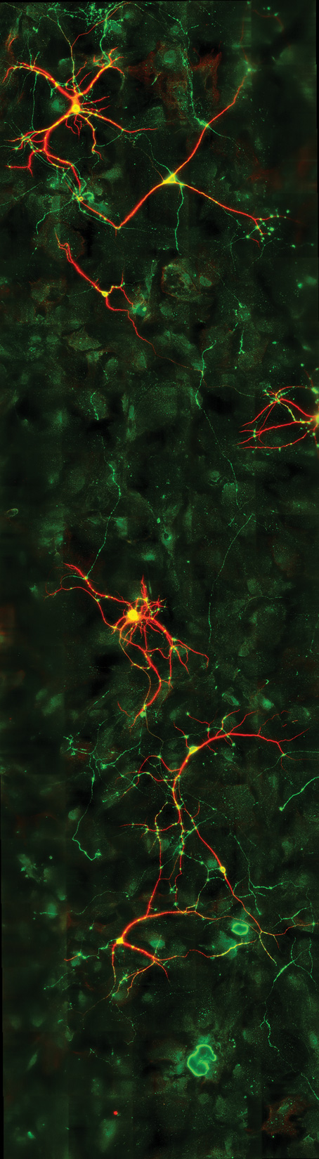 big-neurons.jpg