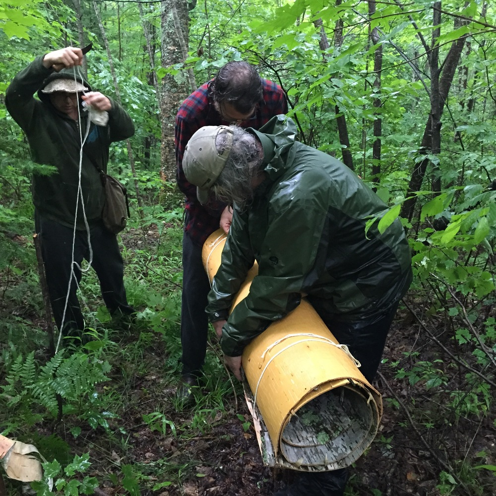 gathering birch bark in the pouring rain