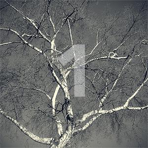 tree-1n.jpg