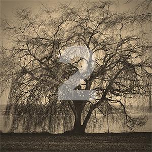 tree-2n.jpg