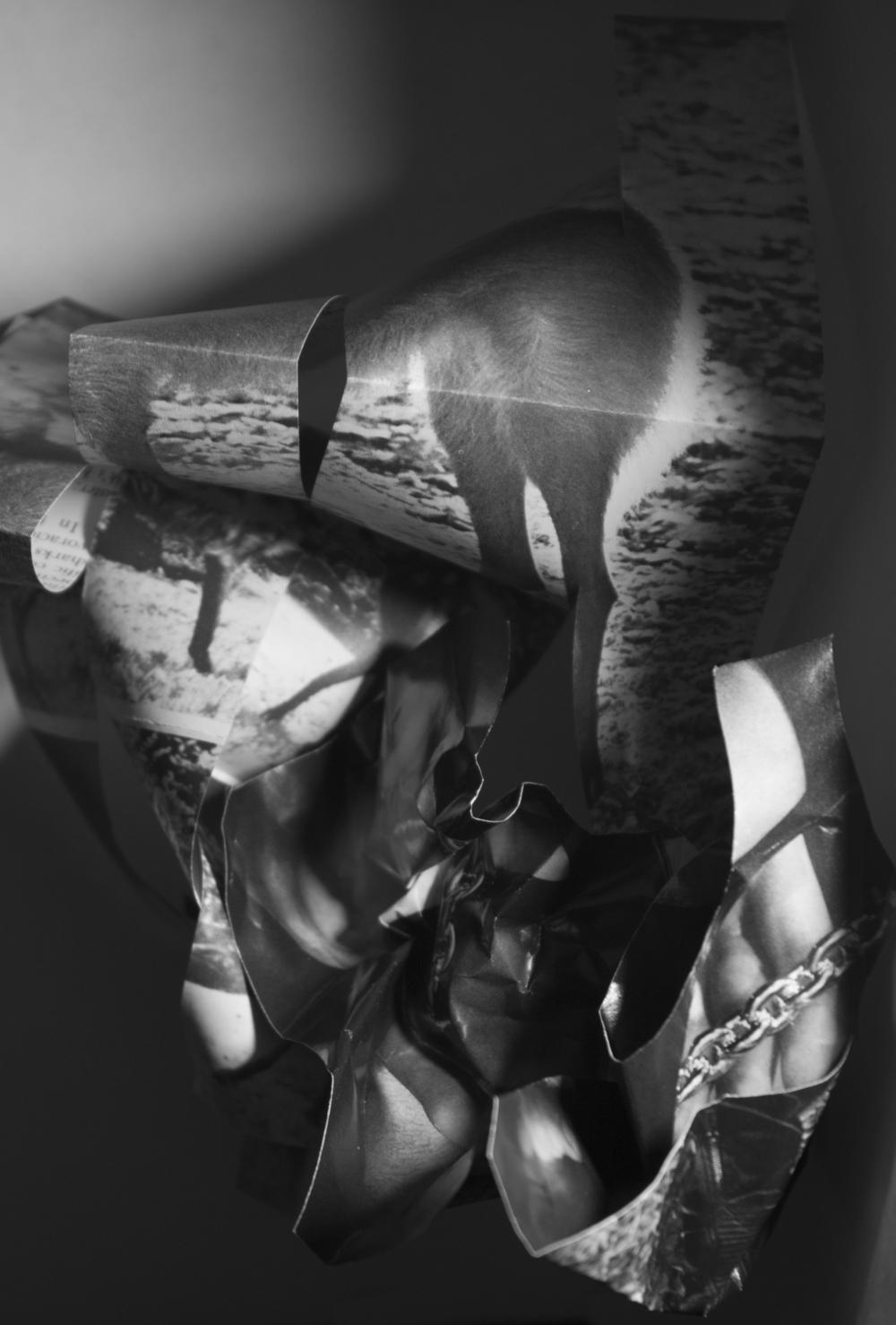 Castor Fiber, Avicularia, Typhlops (2014) | Danielle Rosen
