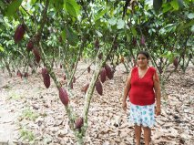 Farmer in the cacao grove
