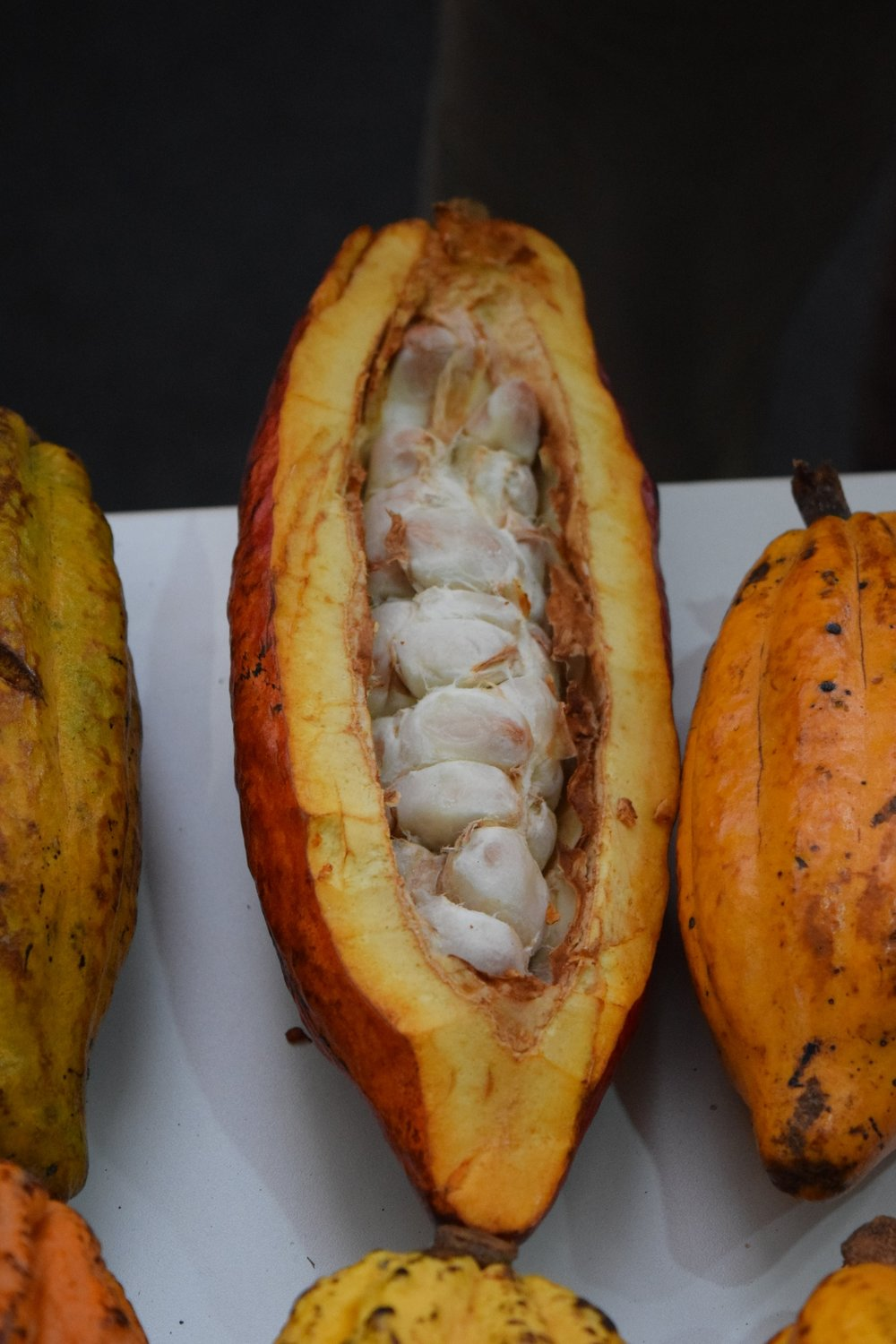Cacao in the skin