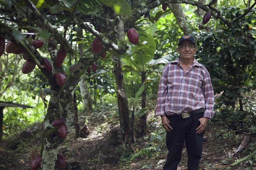 Cacao expert