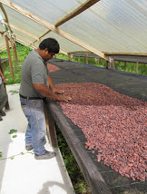 Sorting and drying the cacao