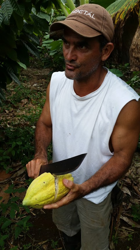 Edwin harvests his incredible cacao