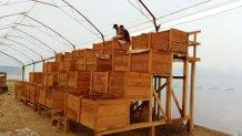 Fermentation boxes at Nahua