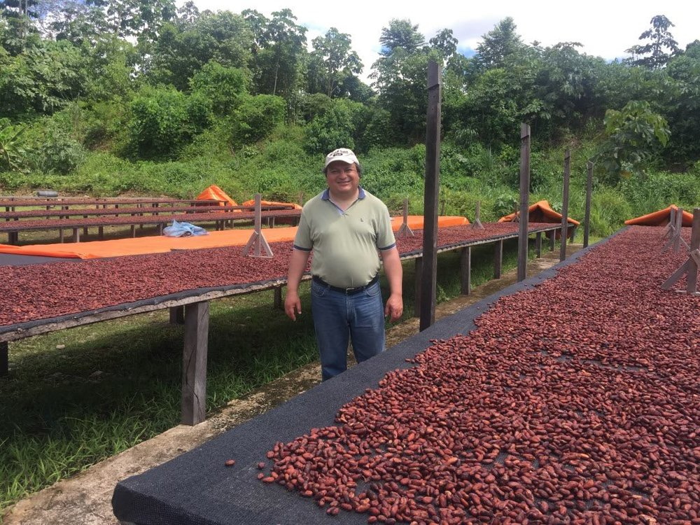 Air drying the cacao