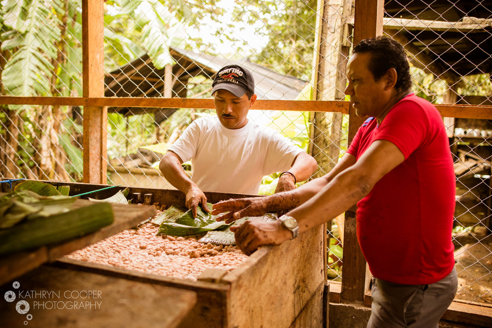 Enliven Cacao ferment - (18).jpg