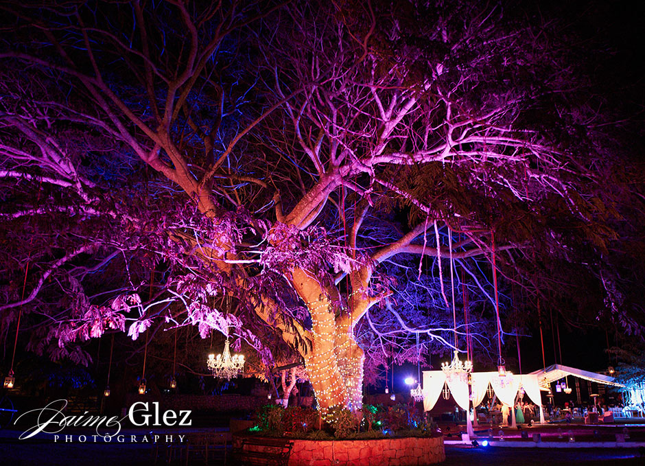 Because there is something special about the tree... was an spectacular view to the party!