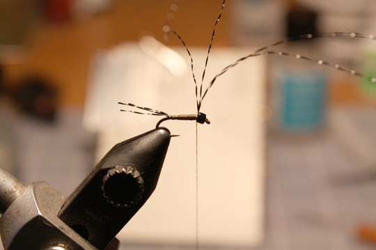 add black kystal flash for tails and leave a long tag towards the eye of the hook.use the thread to form a slim body. build a slight taper towards the hook eye.