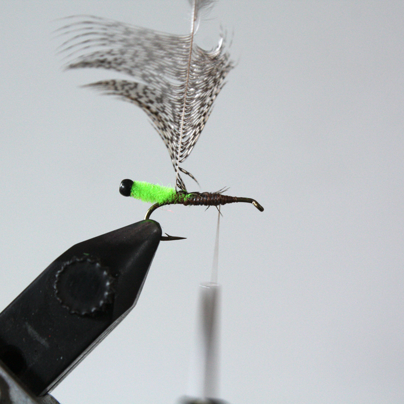 tie in a partridge feather with the curve of the feather facing rearward