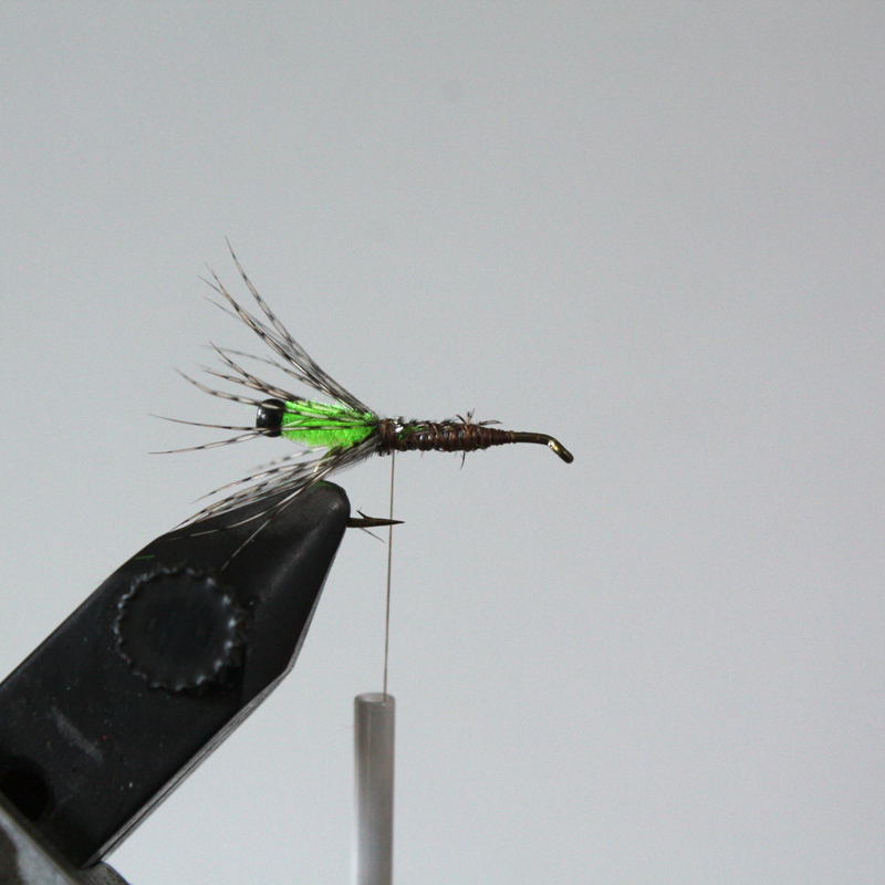 make a few wraps and sweep them back. caddis don't have that many legs and they typically aren't that long but we are going for movement and impressions here
