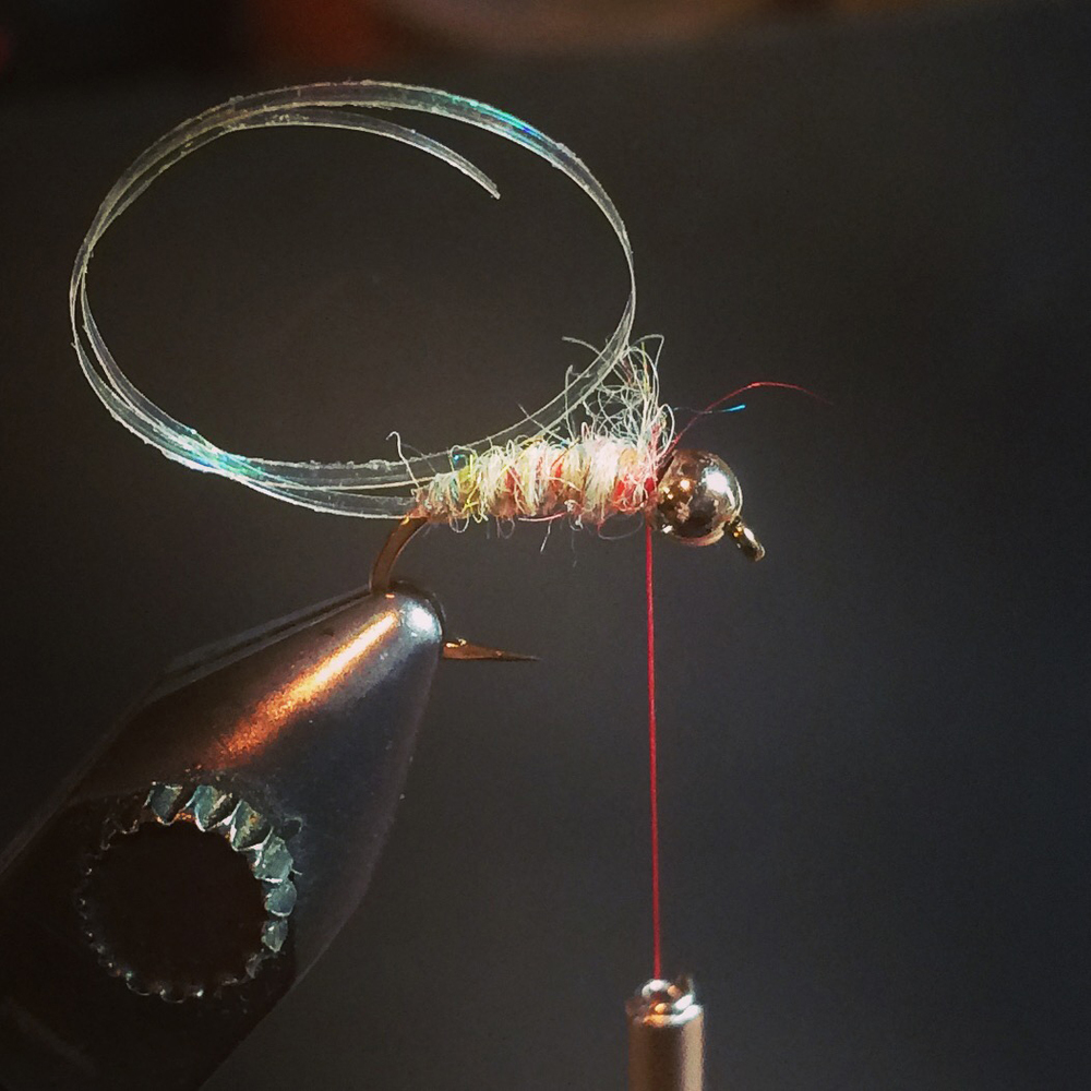 dub your rainbow scud dubbing to right behind the bead forming a slight taper.