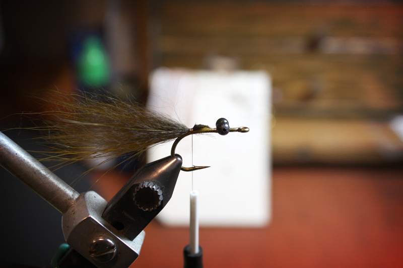 i keep the guard hairs on the bottom of the clump. the color variation they offer will show up when the fly is riding hook up in the water. clip the butt ends at an angle and bind them down.