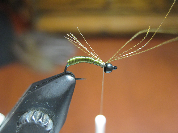 wind forward in touching turns. stretch a little more as you approach the bead to thin the materials out, tie off and tie in 4/5 strands of sparkle pseudo hackle by the middle.