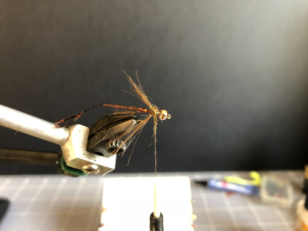 dub half of a thorax. this is Arizona Peacock in golden brown.