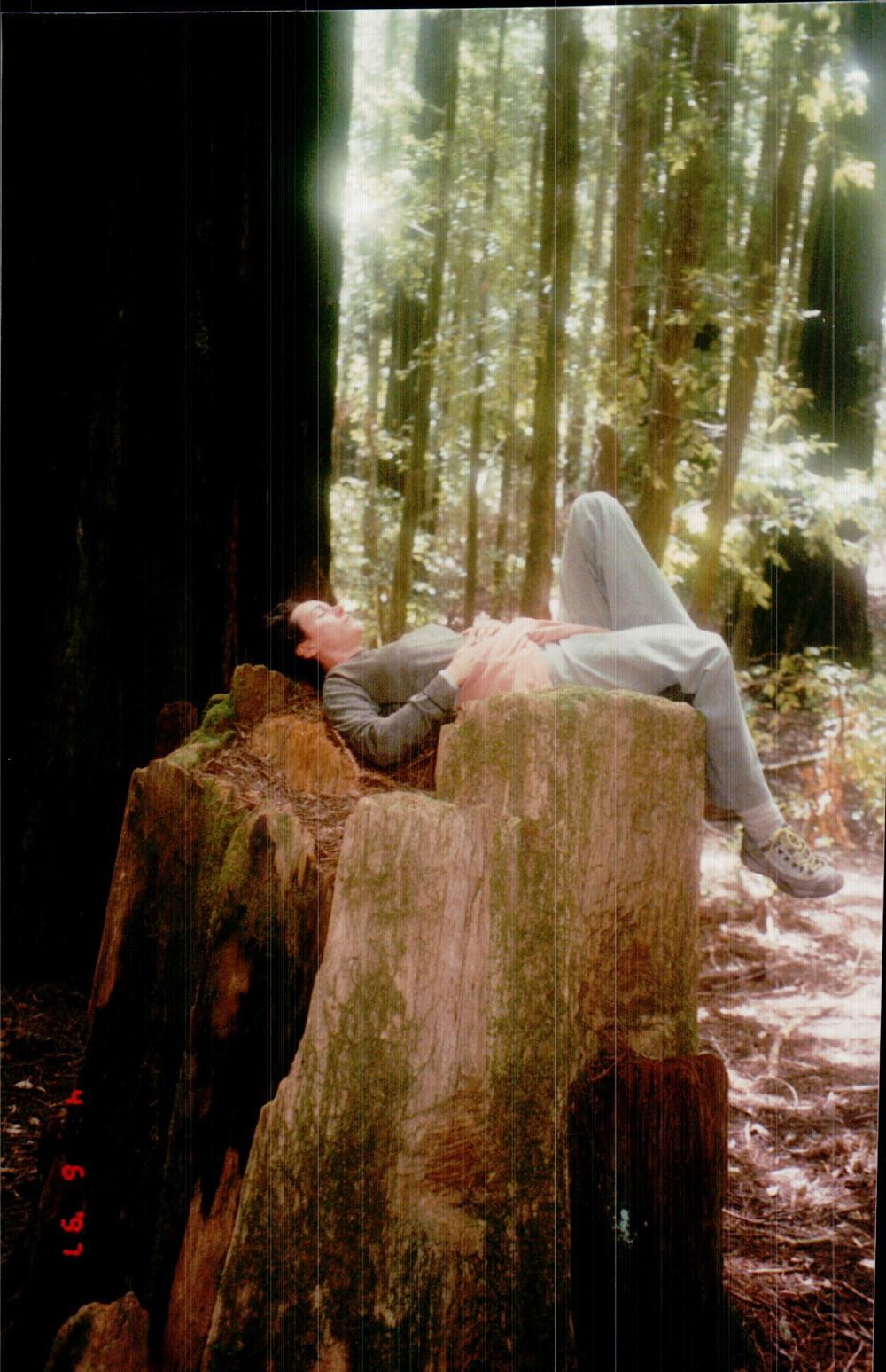 Beloved in California Redwoods