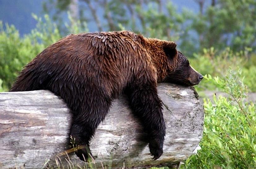 bear loaing.jpg