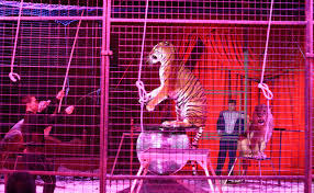 Circus animals are a disgrace to humanity.