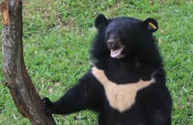 Moon Bear, National Geographic