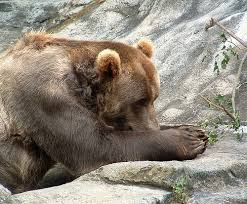 bear praying.jpg