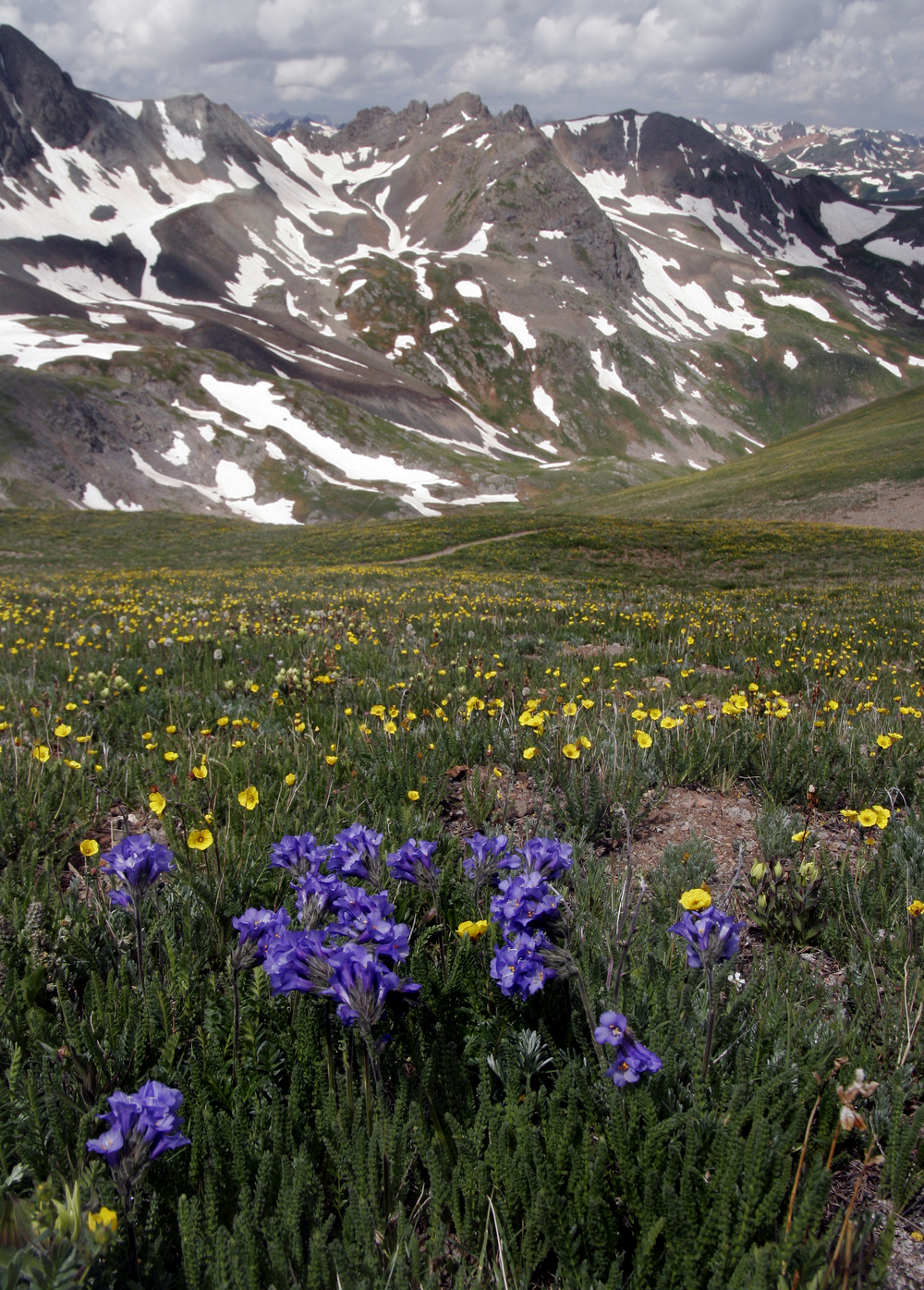 Hurricane Pass Wildflowers