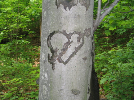 Deep Woods Love