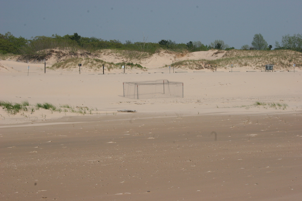 exclosure for piping plovers