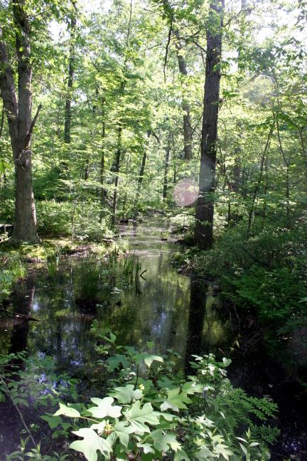 Ambler Flatwoods