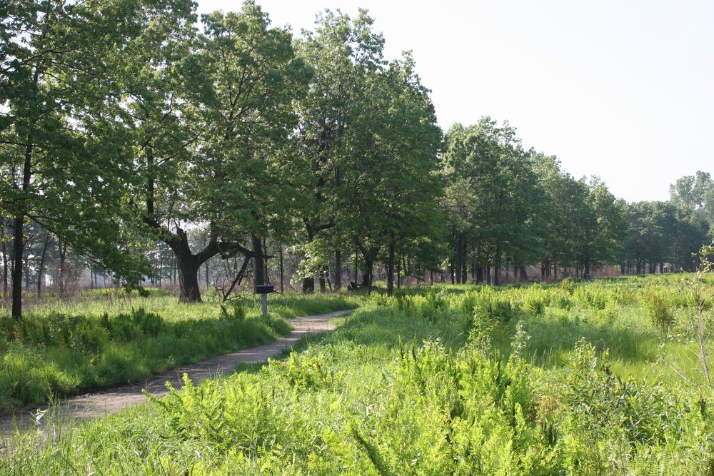 Hoosier Prairie