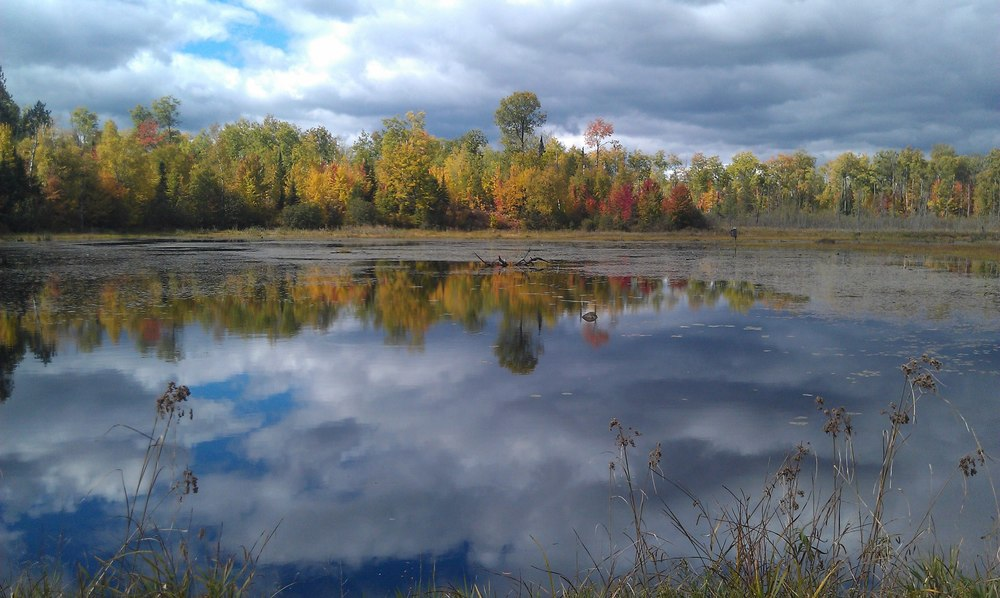 old beaver pond.jpg
