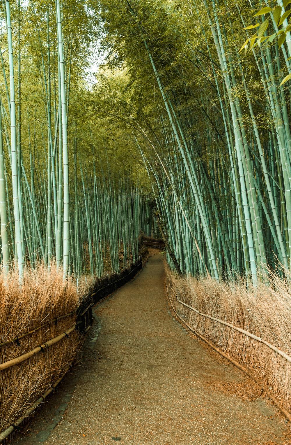 KyotoJapan_2018_AdamDillon_DSCF9778.jpg