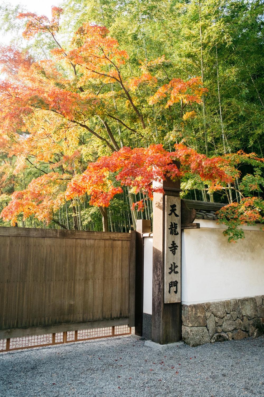 Kyoto_Nov_2018_AdamDillon_DSCF1389.jpg