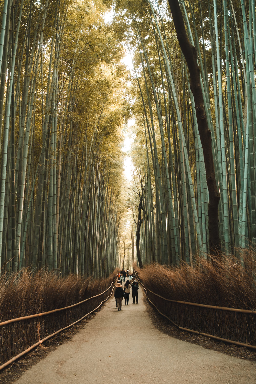 Kyoto_Nov_2018_AdamDillon_DSCF1372.jpg