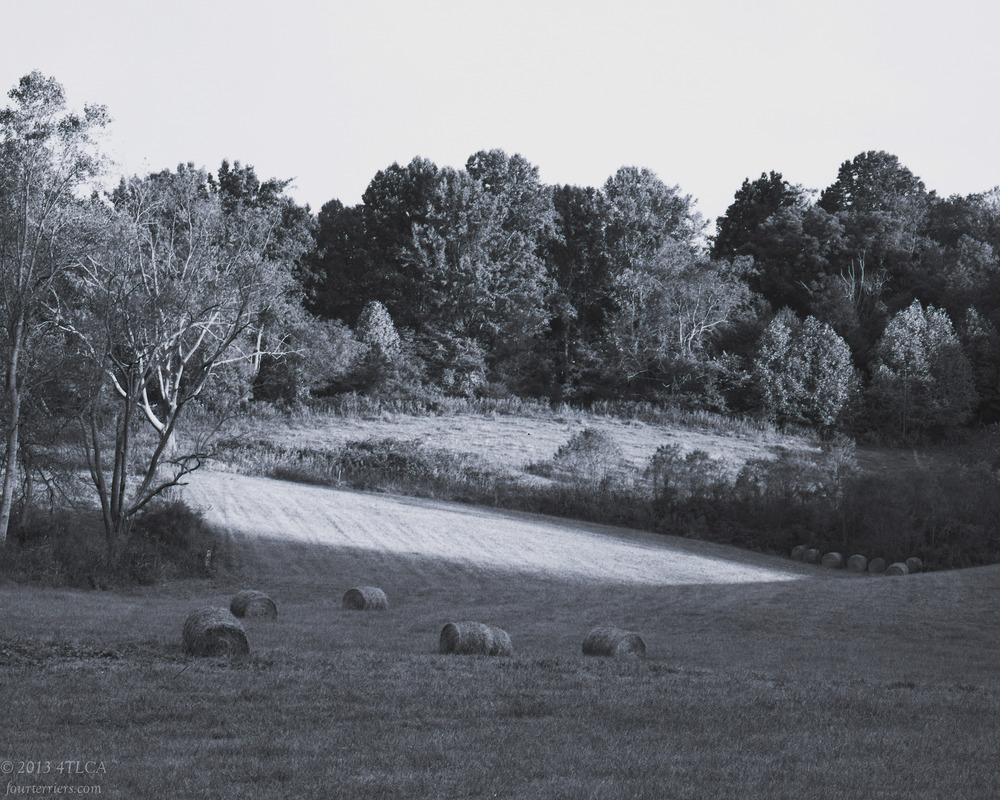 A Field in Washington County, Virginia