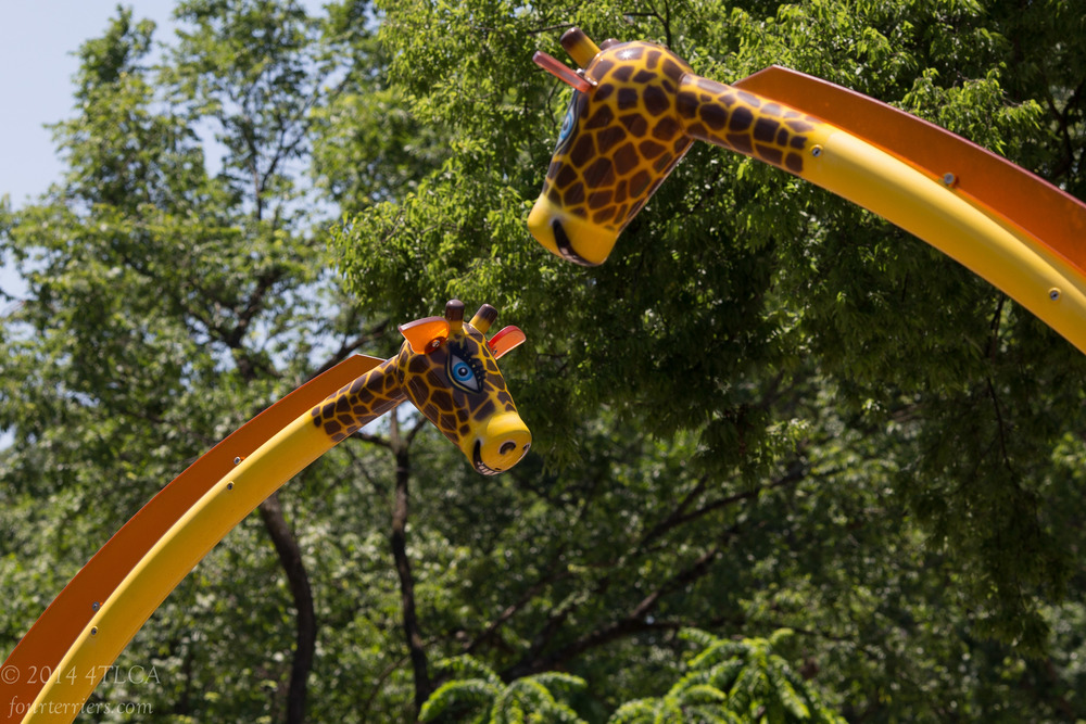 Giraffes, Knoxville Zoo