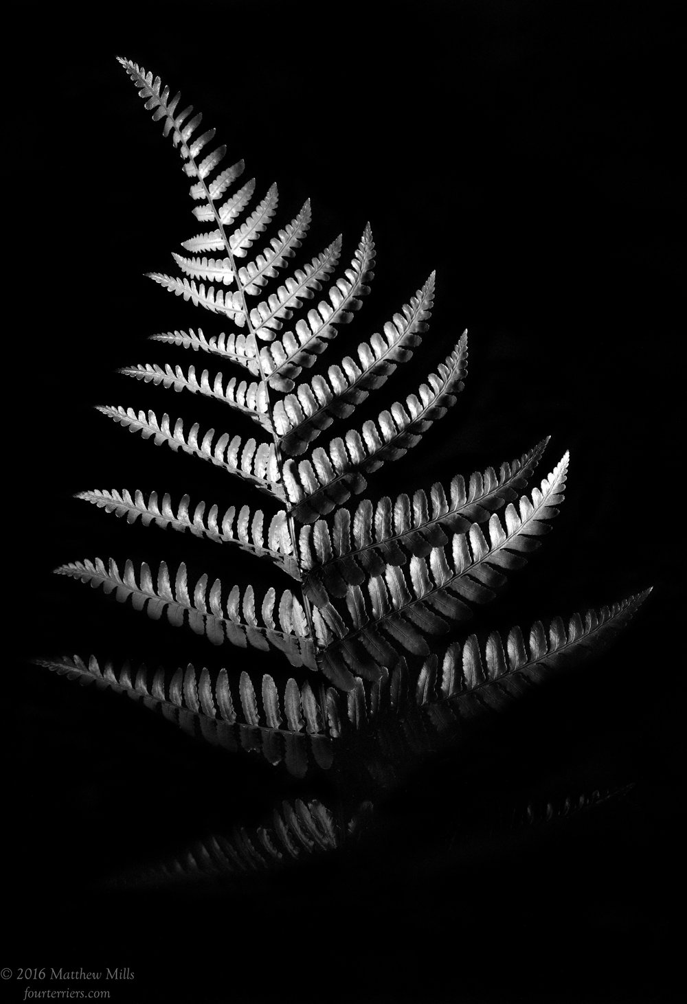 Monochrome Fern 3