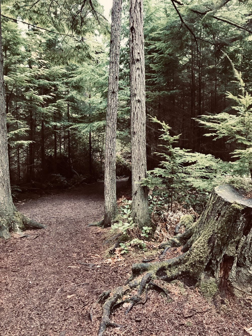 Actual trail in the vicinity of the Wild Running Woodsman by Miranda Brumbaugh