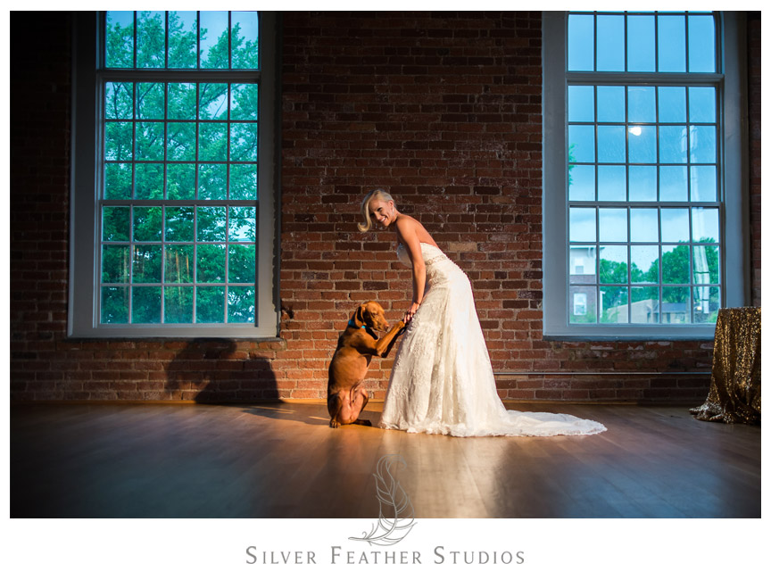 Gorgeous bride with UNC Tar Heel dog at The Cotton Room in Durham, NC.