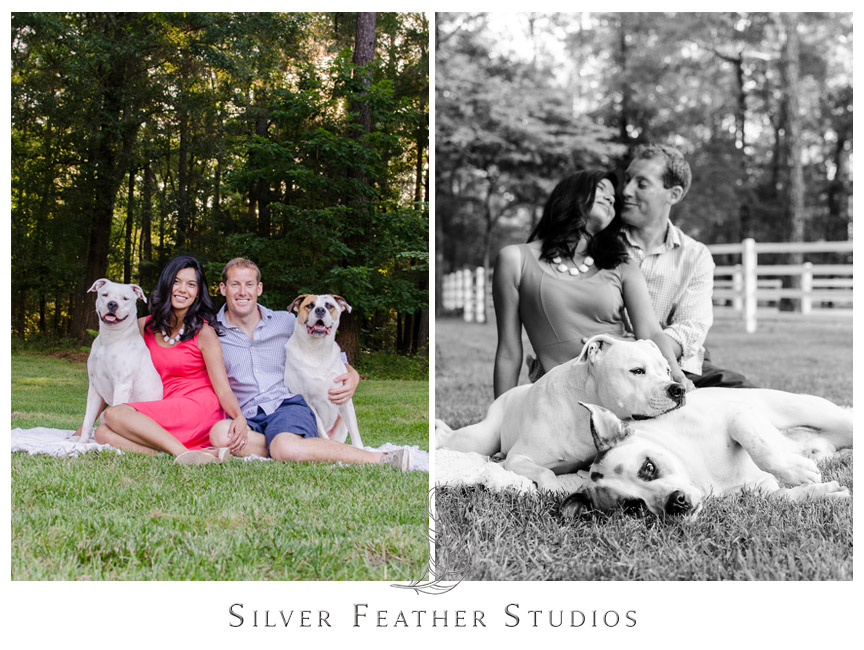 Family shots including two large dogs in Chapel Hill, North Carolina.