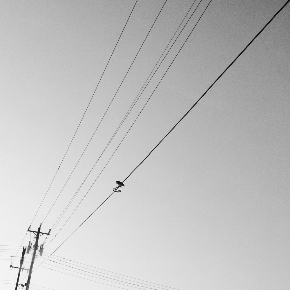 power-lines-and-a-bird-0915.JPG