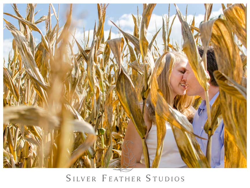 Bride and groom pose in the corn maze at Granddad's Apple's engagement session in Hendersonville, NC   © Silver Feather Studios, Burlington Engagement Videographer & Photographer