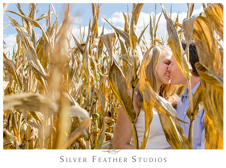 Engagement photography in the corn fields near Asheville. © Silver Feather Studios, North Carolina Wedding Photography & Videography