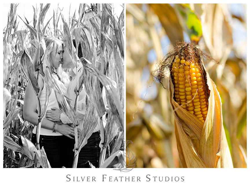 Engagement photography in the corn fields in Hendersonville, NC. © Silver Feather Studios, North Carolina Wedding Photography & Videography
