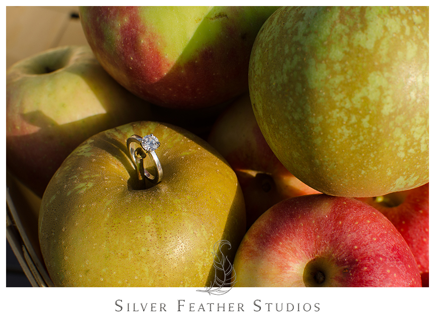 Stunning engagement ring in the apple basket at Granddad's Apple Orchard. © Silver Feather Studios, North Carolina Wedding Photography & Videography